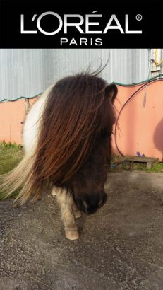 poney loreal